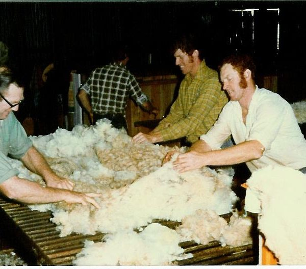 Ireland Family Sheering Sheep