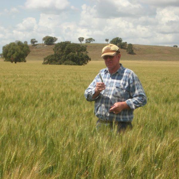 Ireland Family Wheat Crop